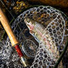 Fly-Fishing on the Highlands-Cashiers Plateau
